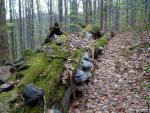 Národní přírodní rezervace - Mionší