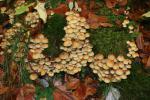 Boubínský prales - přírodní rezervace