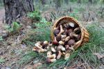 aplikace_na_mobilu_rozpozna_houby_i_v_hlubokem_lese_neni_ale_stoprocentni