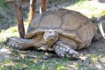 Park exotických zvířat 1