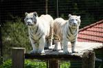 Park exotických zvířat 7