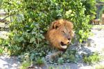 Park exotických zvířat 9
