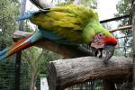 Zoologická zahrada Hodonín 1