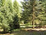 Šluknov 6 Arboretum