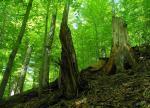 Národní přírodní rezervace - Mionší 2